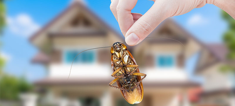 Five Natural Ways to Rid Your Home of Pests.