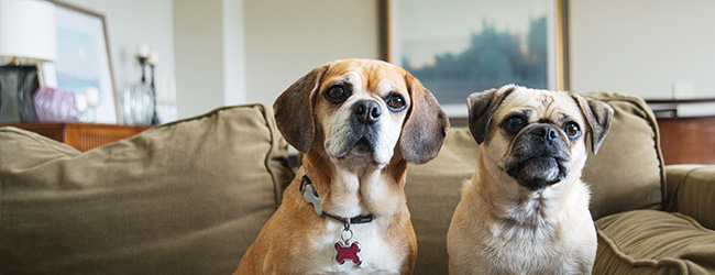 Pet Peeves: How to Keep Your Pets From Soiling Your Home Sale