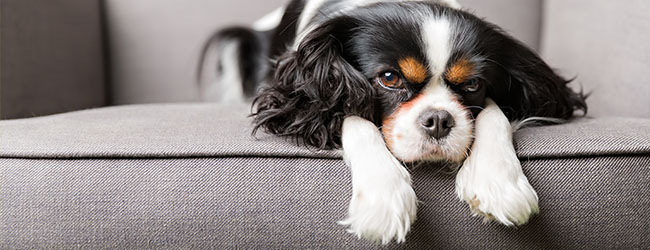 Treat-worthy Tips for Selling Your Home When You Have Pets